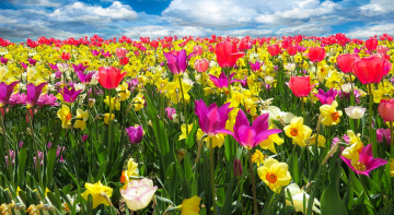 Херсонські волонтери дякують лікарям, даруючи квіти