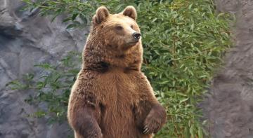 Незаплановані селфі з ведмедем