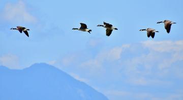Бородач шарить: чому птахи летять на південь, а ми ні?