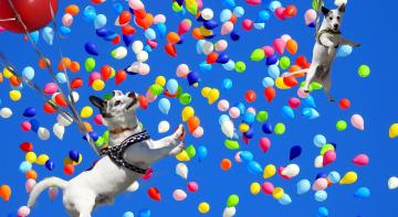 Чи реально полетіти на повітряних кульках - Панова 5G